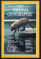 National Geographic cover story white wolf
